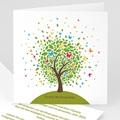 Schmetterlingsbaum - 1